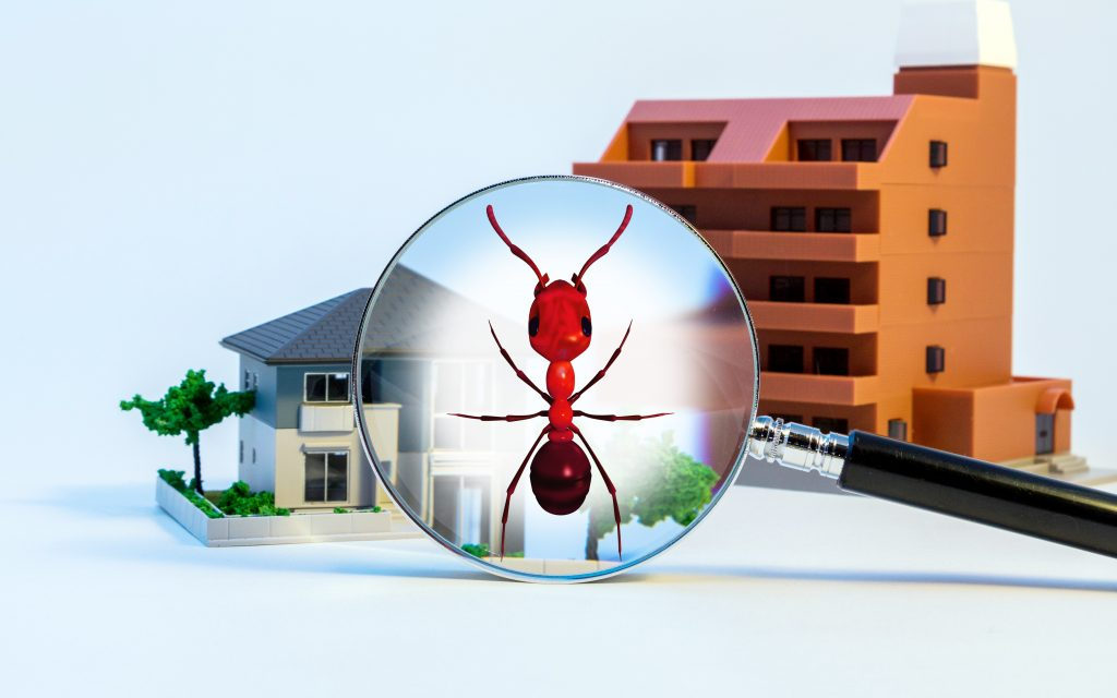 a magnify glass over a large pest